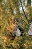 Кот в моем дереве Стоковая Фотография RF