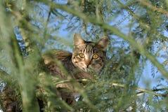 Кот в моем дереве Стоковое Изображение