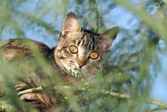Кот в моем дереве Стоковая Фотография