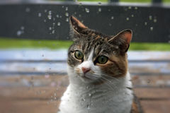 Кот в дожде Стоковая Фотография