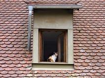 Кот в окне стоковая фотография