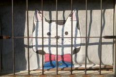 Кот в окне стоковое изображение rf