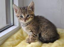 Кот в окне Стоковое фото RF