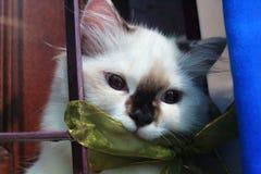 Кот в окне Стоковые Изображения RF