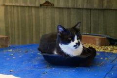 Кот в лотке Стоковая Фотография