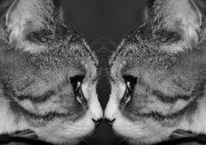 кот в отражении стоковое изображение rf