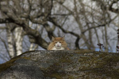 Кот в одичалом Стоковая Фотография