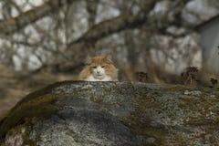 Кот в одичалом Стоковые Изображения