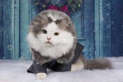 Кот в пальто сидит на двери стоковое изображение