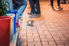 Кот в парадном входе магазина, на ноче стоковая фотография
