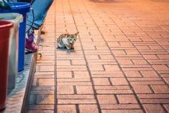 Кот в парадном входе магазина, на ноче стоковые фото