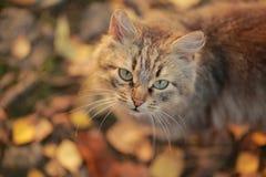 Кот в парке Стоковое Изображение RF