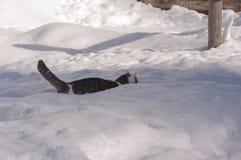 Кот в пейзаже зимы Стоковое фото RF