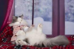 Кот в пижамах выпивая горячее какао с зефирами стоковые фото