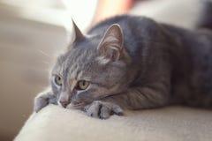 Кот в подоле ` s женщины Стоковое фото RF