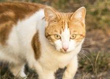 Кот в природе, зеленой траве Стоковые Фотографии RF