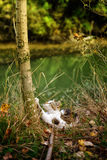 Кот в природе Стоковые Фотографии RF