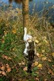 Кот в природе Стоковое Изображение