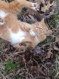Кот в природе Стоковые Изображения