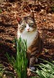 Кот в древесинах Стоковые Изображения RF