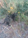 Кот в саде осени Стоковая Фотография RF
