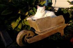 Кот в саде Стоковые Изображения