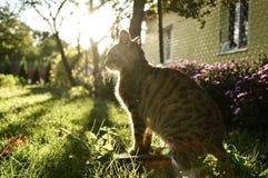 Кот в саде стоковое фото rf