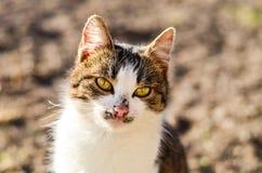 Кот в саде стоковые фотографии rf