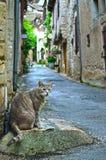 Кот в Святом Cirq Lapopie Стоковое Фото