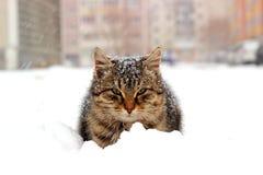 Кот в снеге Стоковые Фото