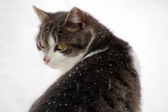 Кот в снеге Стоковая Фотография