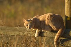 Кот в солнце Стоковая Фотография