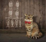 Кот в стеклах около загородки 2 стоковое изображение rf