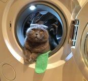 Кот в стиральной машине Стоковое Изображение