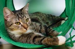 Кот в тоннеле Стоковая Фотография RF
