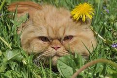 Кот в траве Стоковые Изображения