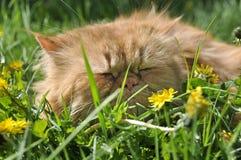 Кот в траве Стоковое Изображение