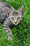 Кот в траве Стоковые Фотографии RF