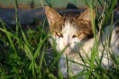 Кот в траве Стоковое Фото