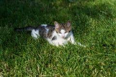 Кот в траве Стоковое фото RF