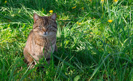 Кот в луге Стоковое Фото