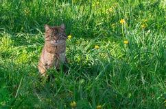 Кот в луге Стоковые Фото