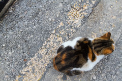 Кот в улице Стоковая Фотография