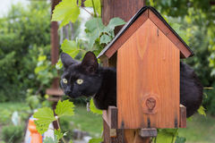 Кот в фидере птицы Стоковое Фото