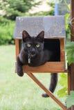 Кот в фидере птицы Стоковое Изображение RF