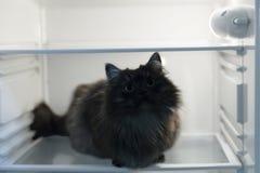 кот в холодильнике Стоковые Фото