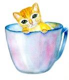 Кот в чашке Стоковая Фотография RF