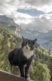 Кот в швейцарской горной вершине Стоковое Изображение RF