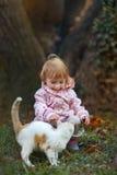 Кот влюбленности стоковое изображение