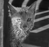 Кот в Юньнань Китае стоковая фотография rf